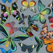 Rbutterfly_bounty__no_flowers_on_gray_copy_shop_thumb