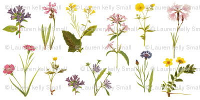 Wildflower Antiquities on White, Mini
