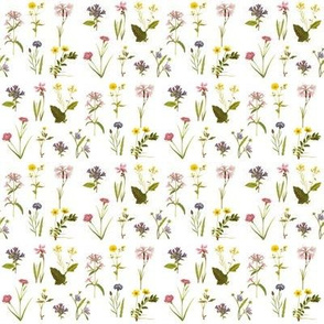 Wildflower Antiquities on White
