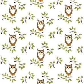 cute owl 1