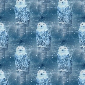 snowy owl in winter - potter's world