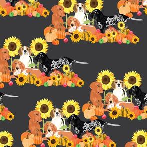 coonhound-autumn-2