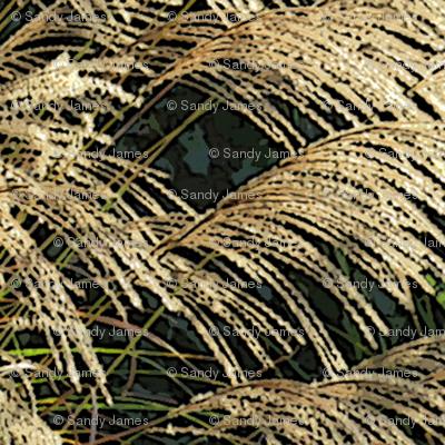 grass_seeds_1