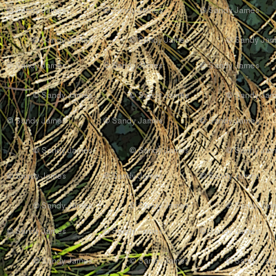 grass_seeds_turned