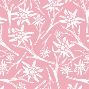 Edelweiss Pink