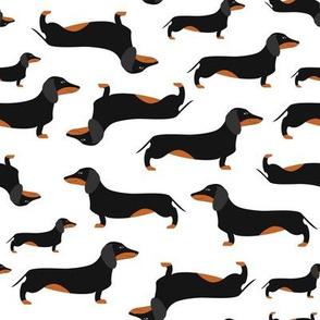 Black dachshunds
