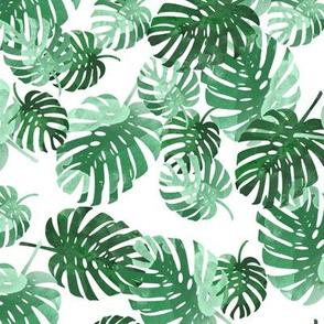 palm_springs sml
