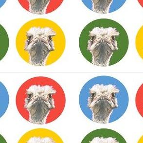 Ostrich_multi