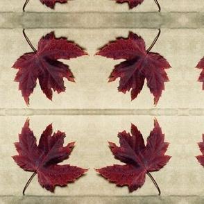 Autumn Maple Leaf on Parchment