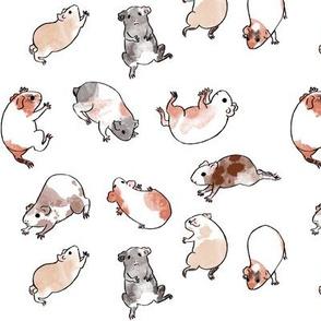 Tumbling Guinea Pigs