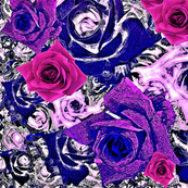 Roses - pink, purple & blue