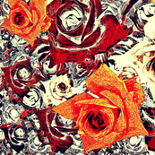 Roses - red, orange, yellow & cream