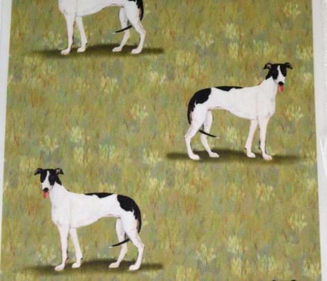 Black and White Greyhound