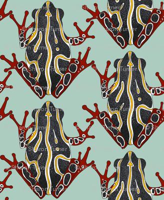 congo tree frog aloe