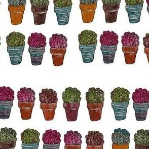 Lettuce See