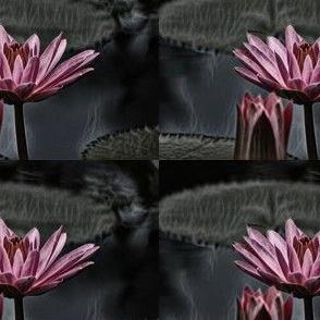 Smoky_Pink_Lily