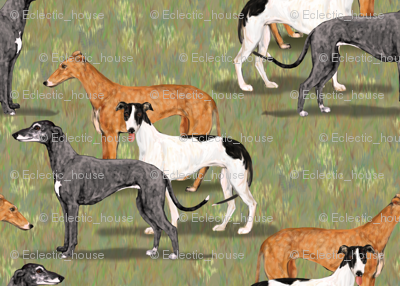 Three Greyhounds Blue Red Fawn and Black and White