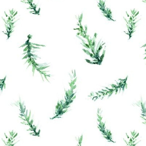 Pine Clippings