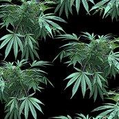 Rrmycannabisart_4spf_shop_thumb