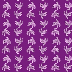 sea star starfish in purple