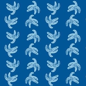 sea star starfish in blue
