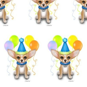 Chihuahua Birthday Boy  M