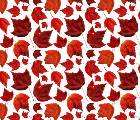 red_maple_november_3 fabric by leroyj on Spoonflower - custom fabric