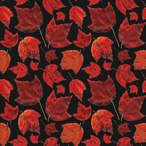 red_maple_november_5