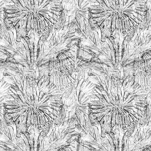 Gray Thistle