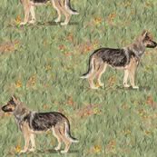 German Shepherd Dog in Wildflower Field red