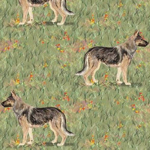 German Shepherd Dog in Wildflower Field red