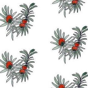 Evergreen Berries