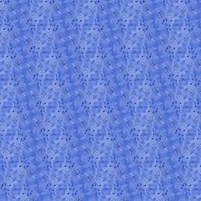 cornflower_blue_but_not_cornflowers