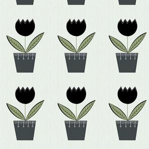Little Black Tulip