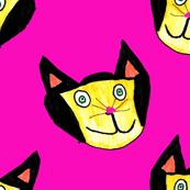 Laci's Crazy Cat