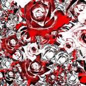Roses - white & red