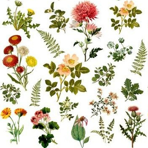 Lil Botanical Garden