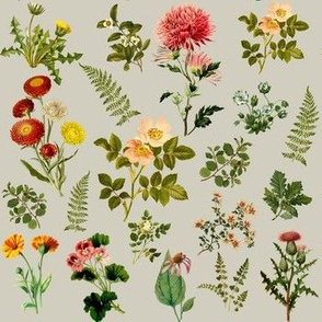 Lil Botanicals - Tan