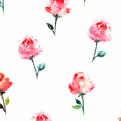 Pink watercolor roses