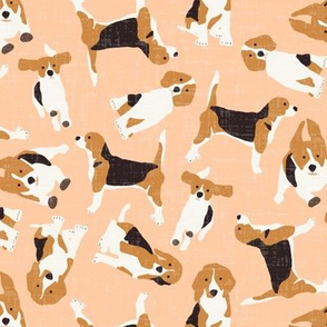 beagle scatter peach