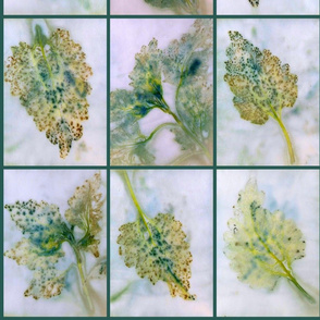 Coleus Leaves Eco-Print Gift Wrap