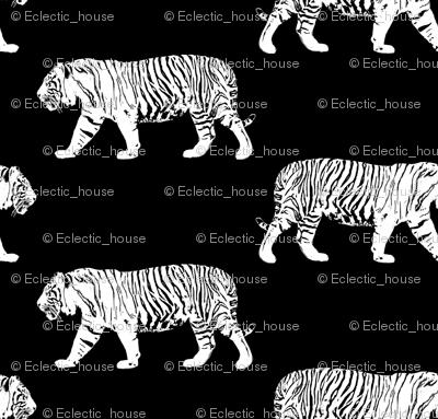White Walking Tiger