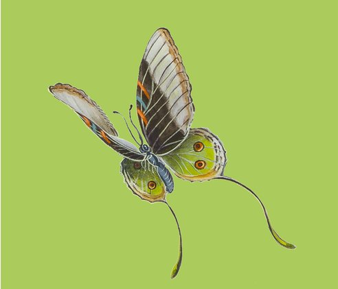 Rjenoiserie_green_brown_and_orange_butterflyl_shop_preview