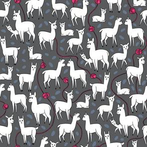 Stylish Alpacas