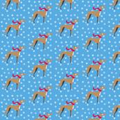Fawn greyhound