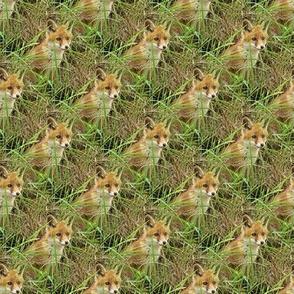 cute young fox