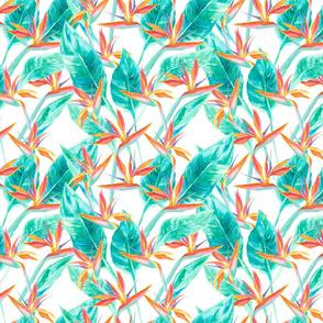 Birds of Paradise White-ed