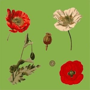 Greenery Poppies