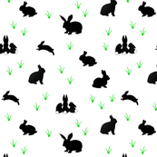 black rabbits with small gras