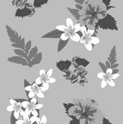 Hawaiian Greys